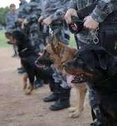CPCães prende grupo suspeito de efetuar assalto, apreende arma de fogo e recupera veículo na AIS 09